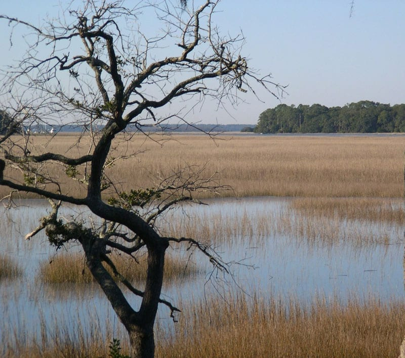 marsh-at-high-tide-2